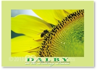 Sunflower - Standard Postcard  DAL-192