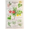ESSENTIAL OILS Cotton/Linen Tea Towel - F201