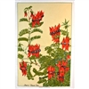 STURT DESERT PEA Cotton/Linen Tea Towel - FC211