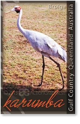 Karumba Brolga - DISCOUNTED Small Magnets  KARM-001