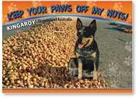 A Blue Heeler dog guarding his peanuts - Standard Postcard  KIN-305