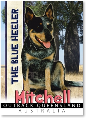 The Blue Heeler - Small Magnets  MITM-002