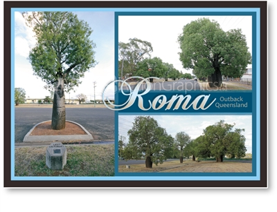 Roma Outback Queensland - Standard Postcard  ROM-004