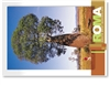 Roma South West Queensland - DISCOUNTED Standard Postcard  ROM-294