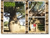 Roma's Largest Bottle Tree - DISCOUNTED Standard Postcard  ROM-429