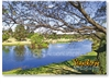 Quart Pot Creek - Standard Postcard  STP-025