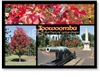 Toowoomba Autumn Time in Queensland - Standard Postcard  TBA-001