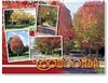 Toowoomba Autumn Time in Queensland - Standard Postcard  TBA-002