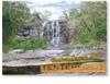 Basket Swamp Falls - Standard Postcard  TEN-003