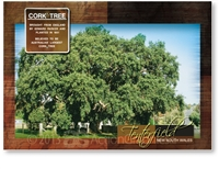Cork Tree - Standard Postcard  TEN-367