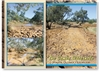 Winton, The Combo Waterhole  - Standard Postcard  WIN-011