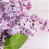 True Lilac Fragrance Oil 2 oz. (96)