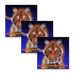 3D Lenticular Flexible Rubber Magnet African tiger from a safari growls in an intimidating way, animation