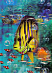 3D Lenticular Postcards, 4 x 6 inches  for Mailing, Tropical Hawaiian Fish Stock Design