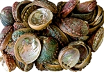 "Wholesale Abalone Shell 4""- 5"" (Pack of 50)"