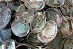 "Wholesale Abalone Shell 5""- 6"" (Pack of 25)"