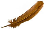 "Wholesale Turkey Dyed Cinnamon Feather 11-13""L"