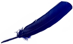 "Wholesale Turkey Dyed Royal Blue Feather 11-13""L"