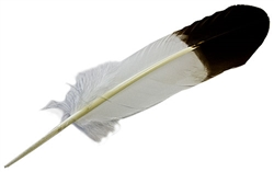 "Wholesale Turkey Brown Eagle Tipped Feather 11-13""L"