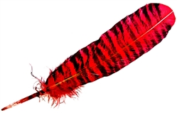 "Wholesale Turkey Feather Dyed Red Banded 11-13""L"