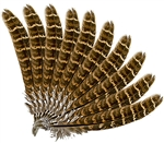 "Wholesale Turkey Feather 6""L"