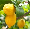 Lemon Essential Oil (Organic): Amber Bottle / Essential Oil: 10 mL