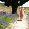 Provence (French) Lavender Oil: Amber Bottle / Fragrance Oil: 10 mL