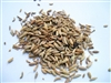 Fennel: Bulk / Whole Organic Fennel