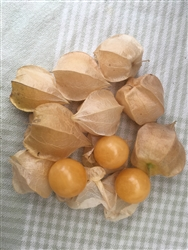 Pineapple Physalis