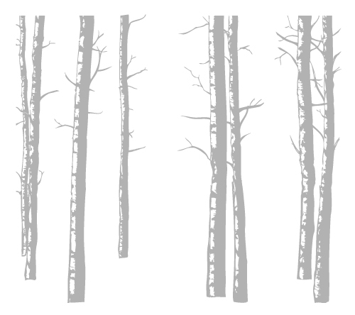 Birch Trees  Wall Decal Part 54