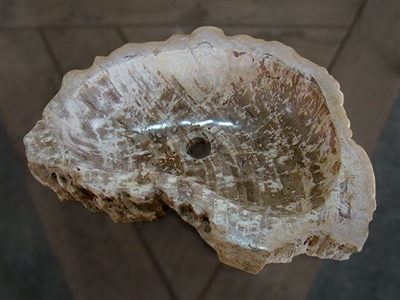 Petrified Wood Vanity Bowl/Sink #027