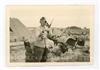 88 mm Gun Carriage and German Soldier with Birds, Original WW2 Photo