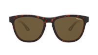 BEX Griz Tortoise/Brown