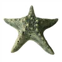 Starfish Ceramic Large - Moss Green..