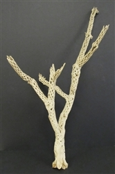 "Sandblasted Cholla Branch, 24""-30"""