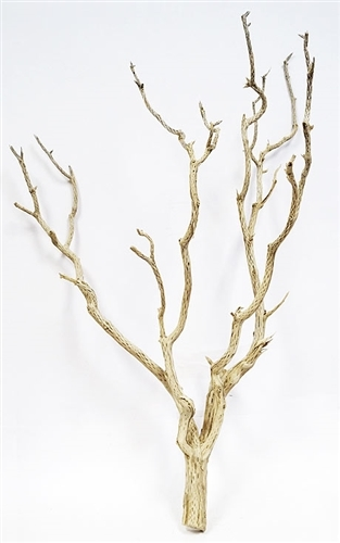 "Sandblasted Cholla Tree, 32""-36"""