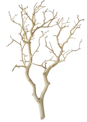 "Sandblasted Manzanita Branches, 24"" tall"