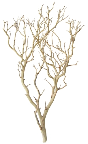 "Sandblasted Manzanita Branch, 30"" tall"