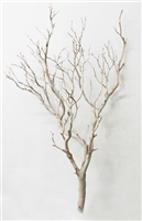 "Sandblasted Manzanita Branches, 42"" tall"