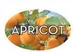 Apricot Flavor Label - 1.25 in. x 2 in.
