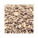 Azar Oil Roasted UnSalted 25 Pound Sunflower Kernels Nuts