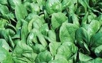 Spinach Leaf Can - 10 Lb.