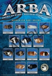ARBA Color Cavy Breed Poster