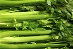 Tendercrisp Celery Seeds Non GMO Heirloom