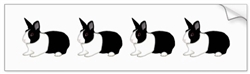 Dutch Rabbit Bumper Sticker