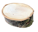 XL Willow Tree Chew Block