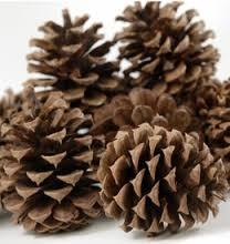 Just Plain Old Pine Cones