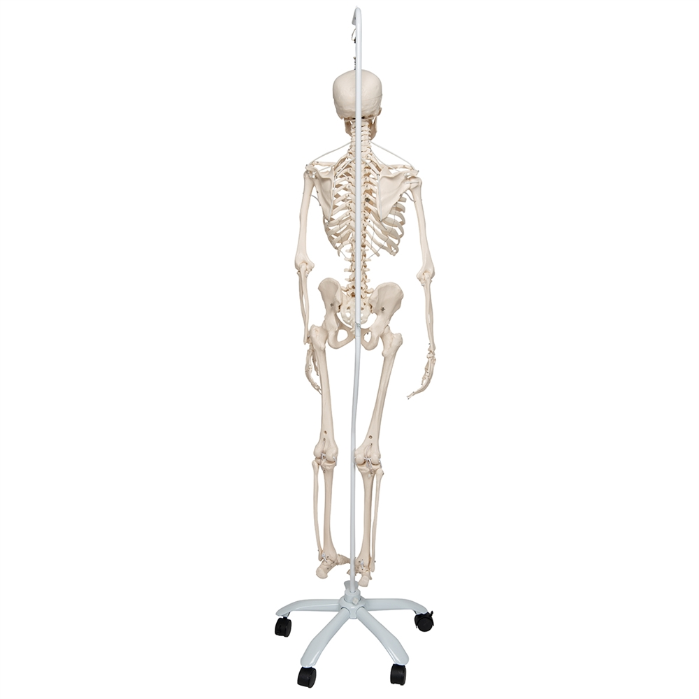 Functional Human Skeleton Flexible Realistic Movement Posable