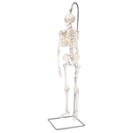 Mini Skeleton Shorty On Hanging Stand - A18-1