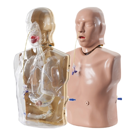 CORMAN - Adult Nasogastric and Nasojejunal Feeding Trainer - AR90
